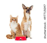 Small photo of red dog and red kitten looking
