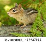 closeup of a cute female... | Shutterstock . vector #497927953