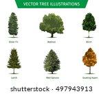 different tree sorts with names.... | Shutterstock .eps vector #497943913