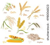 cereal plants vector icons... | Shutterstock .eps vector #498006823