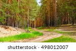Pine Forest With Sandy Road At...