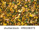 gold leaves on the earth in... | Shutterstock . vector #498108373