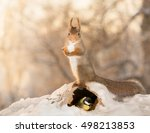 Red Squirrel In Snow With An...