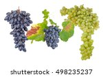 Two Clusters Of Ripe Blue Tabl...