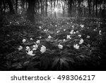 Beautiful White Anemona Flower...