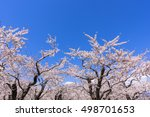 cherry blossom and blue sky | Shutterstock . vector #498701653