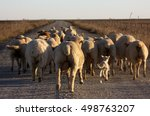 Sheeps In Our Way