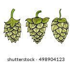 set of hops vector visual... | Shutterstock .eps vector #498904123