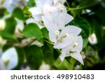 Beautiful White Bougainvillea...