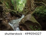 natural river in tropical... | Shutterstock . vector #499054327