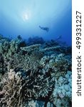 Small photo of SUDAN, Red Sea, U.W. photo, divers and staghorn corals (Acropora cervicornis) - FILM SCAN