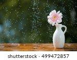 pink gerbera daisy flower in... | Shutterstock . vector #499472857