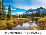 flock of birds is reflected  in ... | Shutterstock . vector #499552513