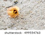 soft focus of orange flower and ... | Shutterstock . vector #499554763