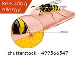 vector illustration of a bee... | Shutterstock .eps vector #499566547