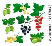 set of cartoon gooseberries ... | Shutterstock .eps vector #499578637