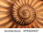 Small photo of ammonites fossil as nice natural geology background