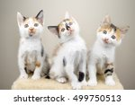 Stock photo cats 499750513
