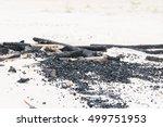After Bonfire On The Sand Beach