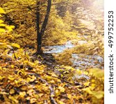 autumn forest with tree at a... | Shutterstock . vector #499752253