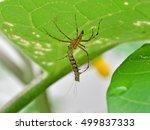 Biological Control Of...