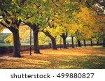 Autumn Trees On Vistula...