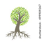 tree with roots vector... | Shutterstock .eps vector #499909267