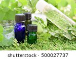 essential oils and natural... | Shutterstock . vector #500027737