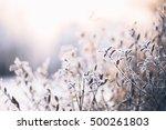 beautiful  branch bush leaves...   Shutterstock . vector #500261803