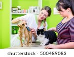 Stock photo cat and dog together at vet or pet hairdresser 500489083
