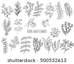 set of branches  flowers and... | Shutterstock .eps vector #500532613
