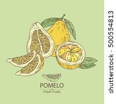 background with pomelo and... | Shutterstock .eps vector #500554813