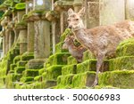 Stock photo young deer in nara park japan the deer the symbol of the city of nara roam freely and are 500606983