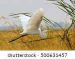 Great Egret  White Heron ...