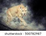 Close Up Puma In Smoke On Dark...