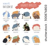 rabbit  lapin breed icon set.... | Shutterstock .eps vector #500876803