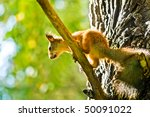 squirrel siting on branch with... | Shutterstock . vector #50091022