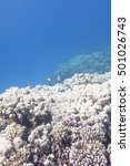 Small photo of Coral reef with great porites coral at the bottom of tropical sea, underwater