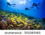 big school of yellowfin... | Shutterstock . vector #501085483
