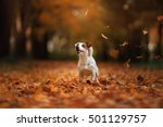 Autumn Mood. Jack Russell...