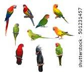 big set of macaw parrot birds.   Shutterstock . vector #501231457