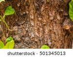 Closeup Of Tree Trunk Details...
