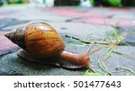 Snail Walk After Rain Fall.
