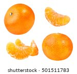 collection of tangerines fruit... | Shutterstock . vector #501511783