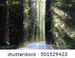 avenue of the giants  running... | Shutterstock . vector #501529423