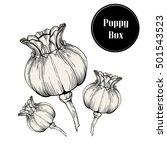 hand drawn poppy flower boxes... | Shutterstock .eps vector #501543523