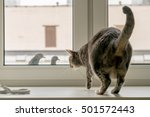 Cat Confronts Two Pigeons From...