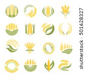 cereal ears and grains set for... | Shutterstock .eps vector #501628327
