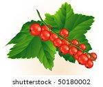 red currant. vector. | Shutterstock .eps vector #50180002