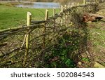 traditional hedge laying... | Shutterstock . vector #502084543